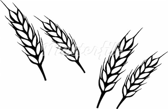 Grain clipart padi Art Clip Clip and Black