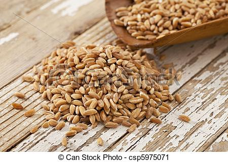 Grains clipart photography Scoop grain (ancient scoop of