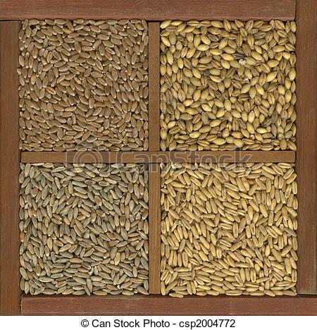 Grains clipart photography Wheat and oat cereal Photo