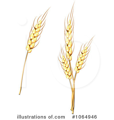 Barley clipart wheat Wheat by Free Stock Sample