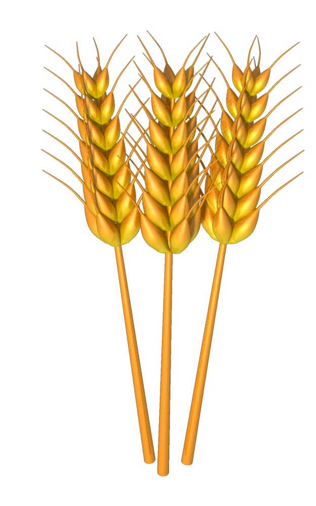 Grain clipart wheat bundle Grain Art Images grain%20clipart Free