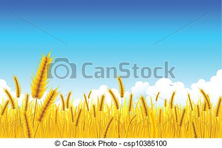 Grain clipart wheat farm Vector of golden Farm of