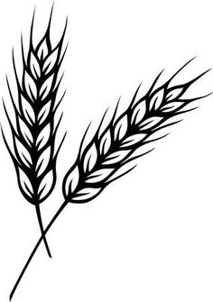 Grain clipart wheat bundle Possible Cereals  Rye wheat