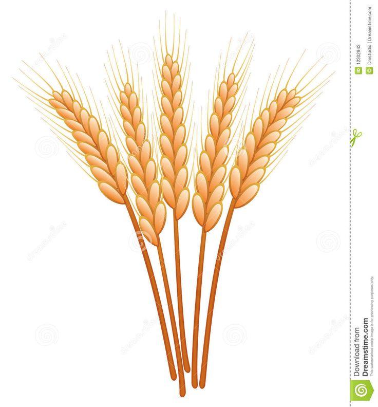 Grain clipart wheat leave Plant > Go Pinterest garden