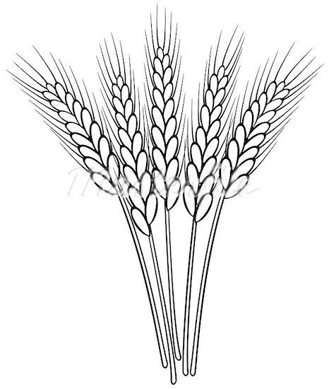 Grains clipart wheat plant Clipart Clipart Clipart Panda Grain