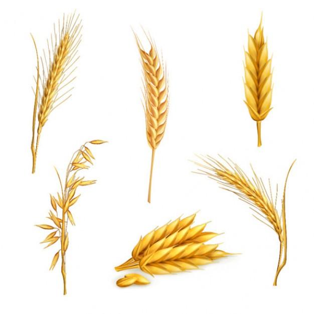 Grain clipart wheat leave I middle love Tattoo Body