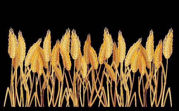 Grains clipart wheat plant Pinterest Clip Clipart Picture Transparent