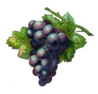 Grape clipart bagay About on free Pinterest best