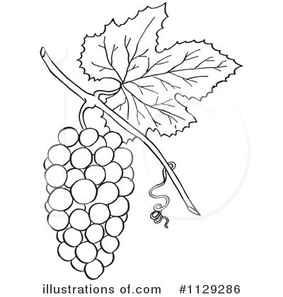 Grape clipart black and white Clipart collection outline black Illustration