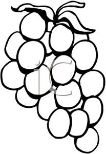 Grape clipart black and white Black clipart and And Grape