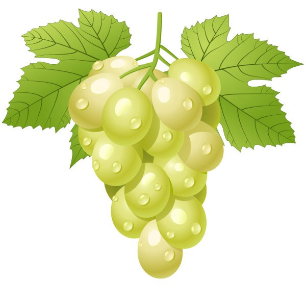 Grape clipart cartoon Fruit Grapes My Clip Cartoon