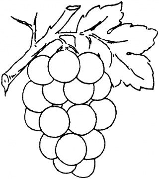 Grape clipart coloring page #7