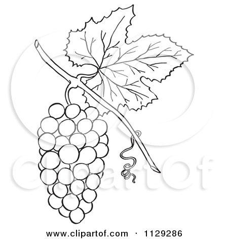 Grape clipart drawn Clip Clipart art Grapes art