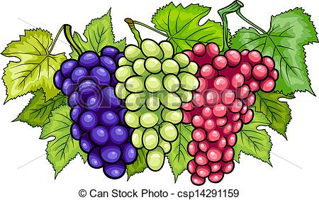 Grape clipart drawn Bunches grapes of bunches