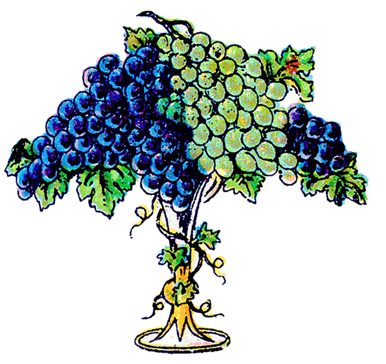 Grape clipart fancy The Grapes Clip Art Grapes