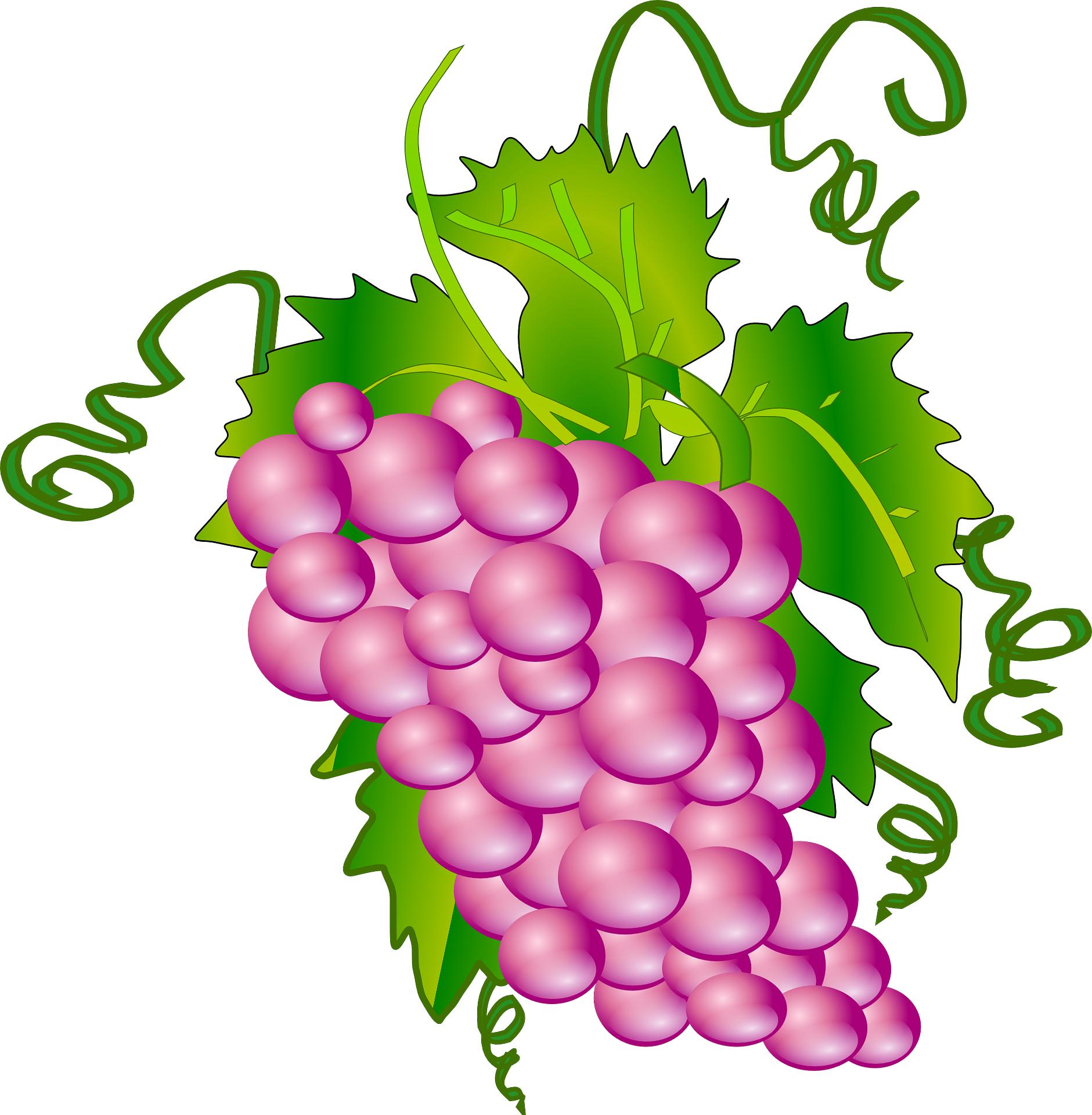 Grape clipart five #7