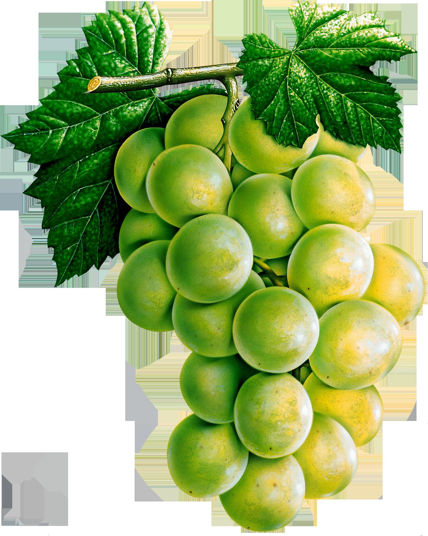 Grape clipart five #3