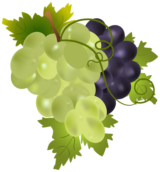 Grape clipart friut Image Image Grapes Yopriceville Grapes