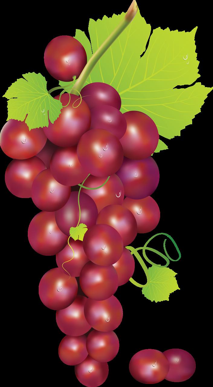 Grape clipart frut Picture Pintura ClipartFruits · Transparent