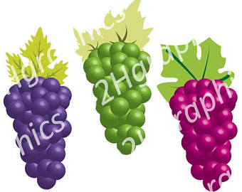 Grape clipart frut Watercolor art Vector Clipart Red