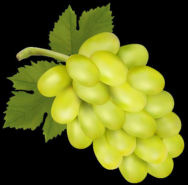 Grape clipart frut Clip Art Art PNG Image