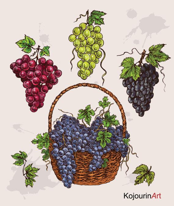 Grape clipart frut Clipart Basket Grapes Black Purple