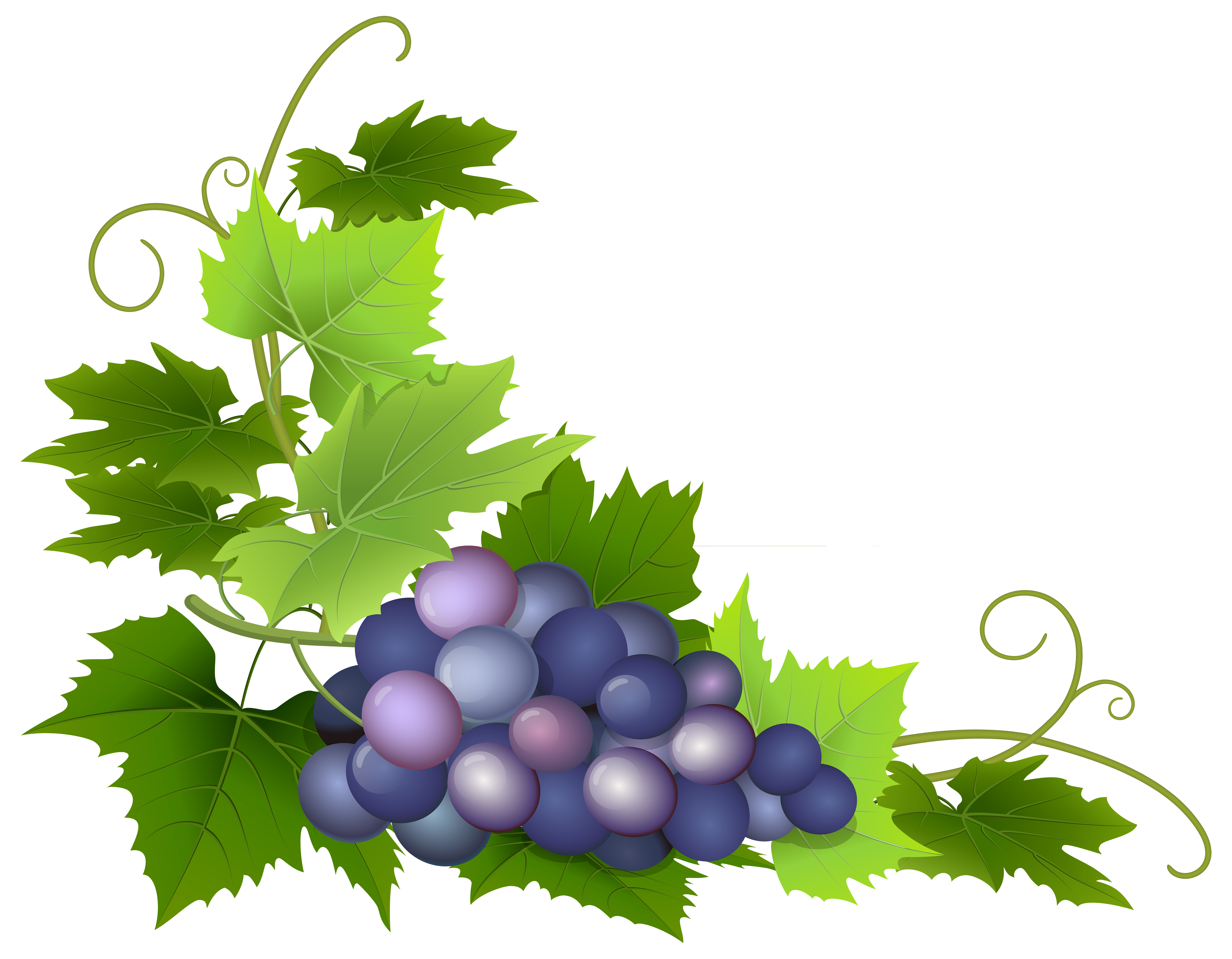 Grape clipart grape leaf Clip full Quality View PNG
