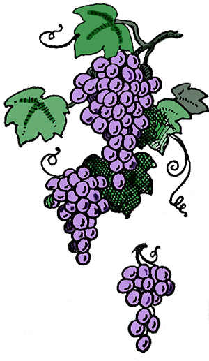 Grape clipart grape tree Grape vines grape 12 Pearltrees