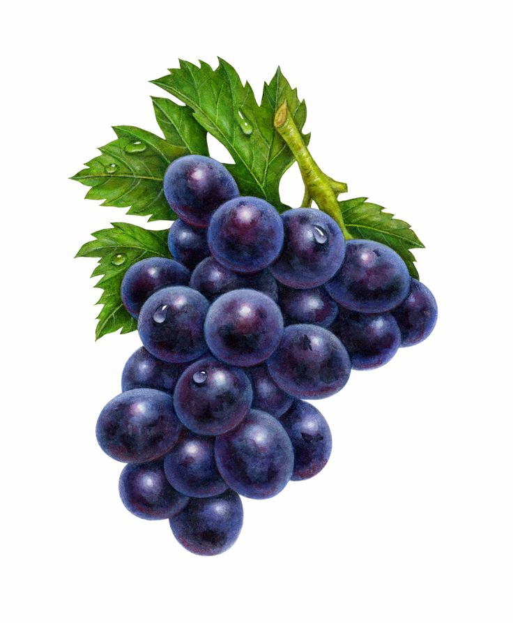Grape clipart healthy food & Food Drink images on