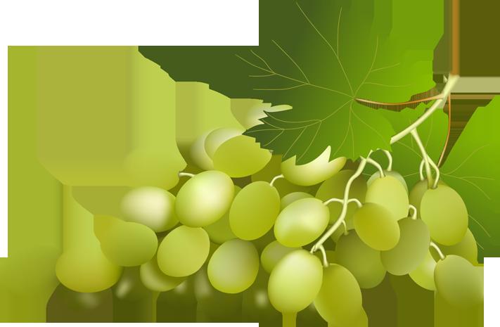 Grape clipart mga #1