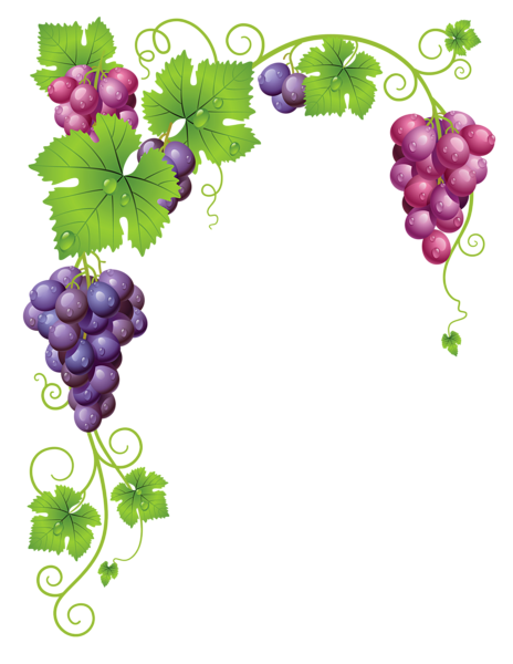 Grape clipart mix fruit #9