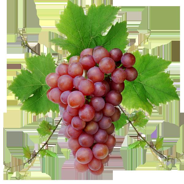 Grape clipart one Grape Photo Full com Stock