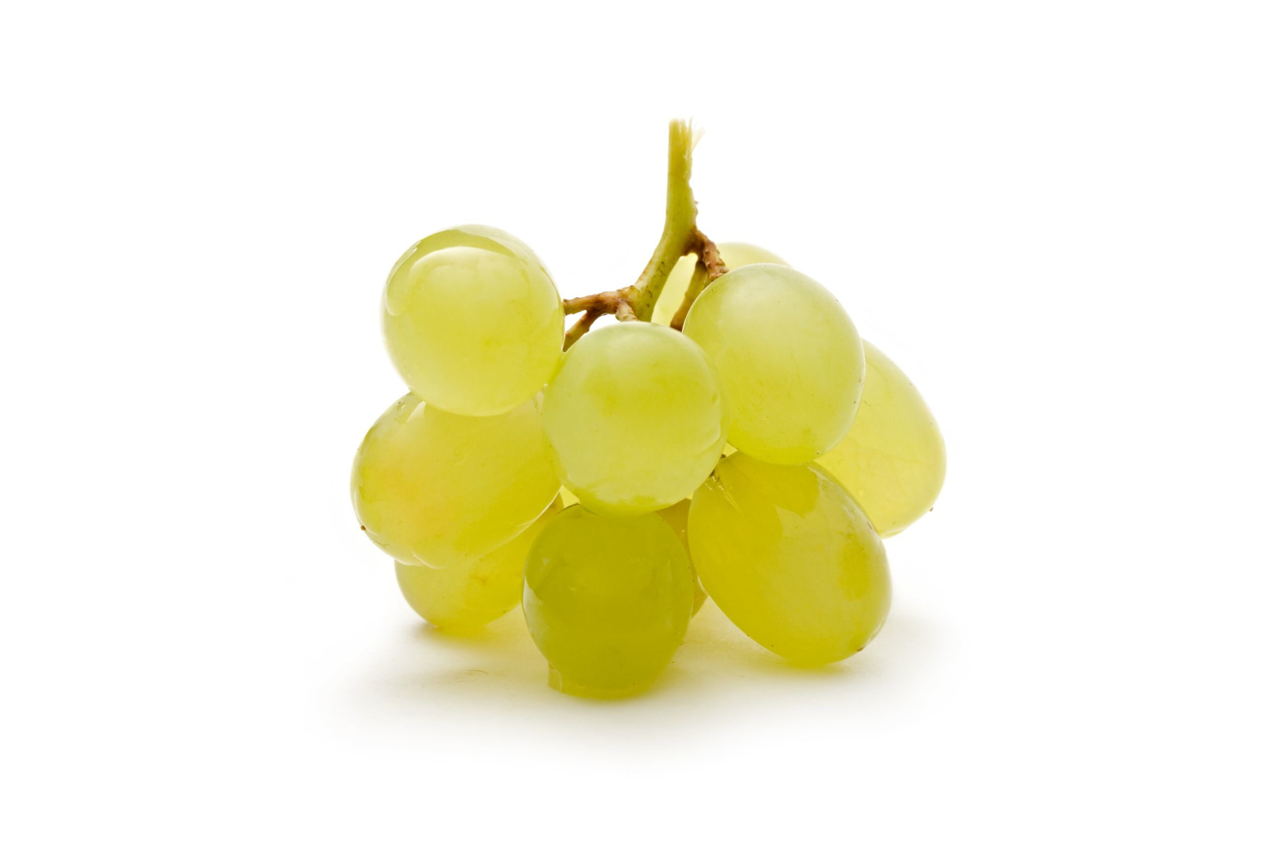 Grape clipart one Clipart One Grape