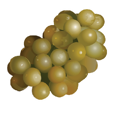 Grape clipart roman #7