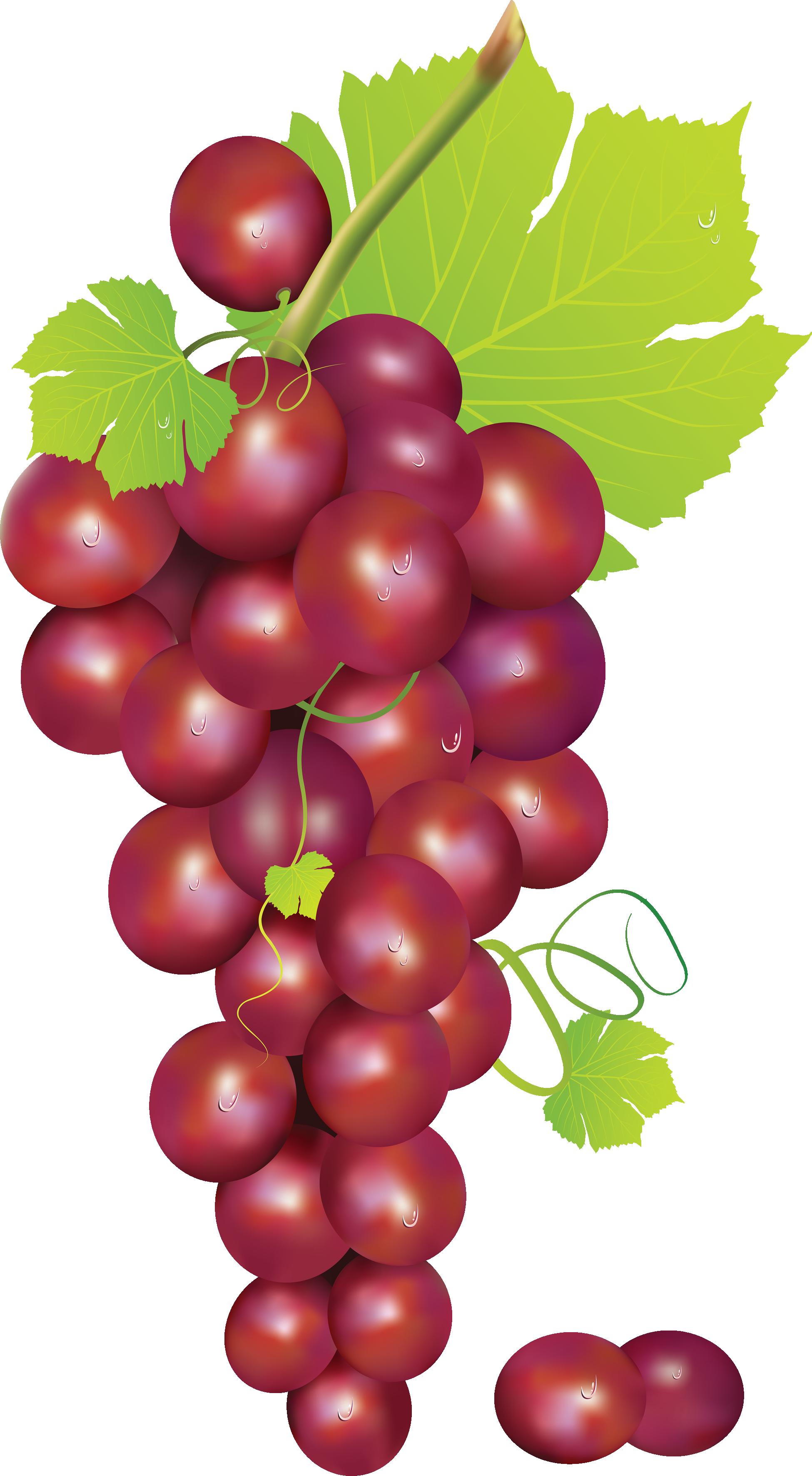 Currants clipart Grape vine art Grape 5