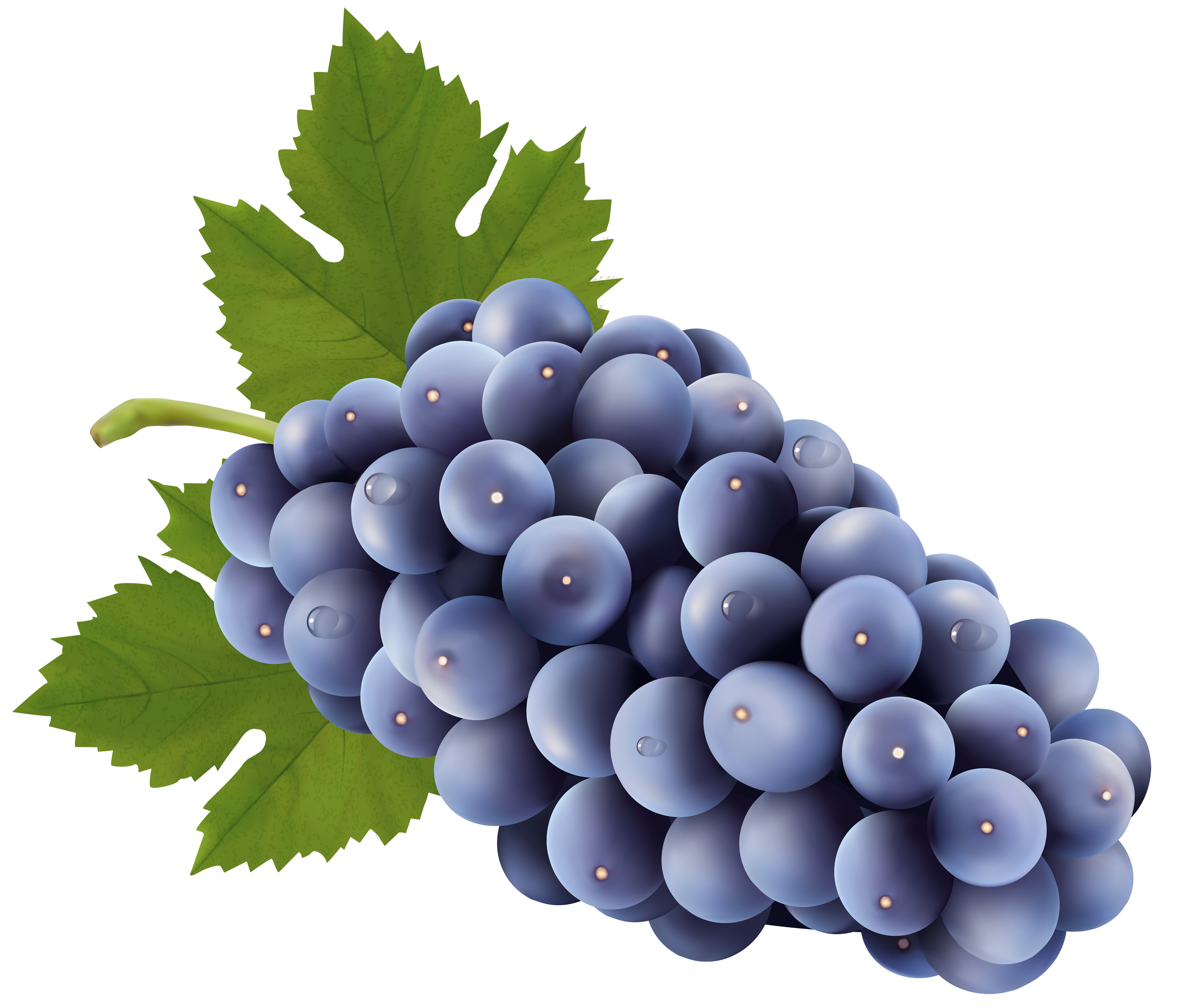 Blueberry clipart transparent View Free Yopriceville size High
