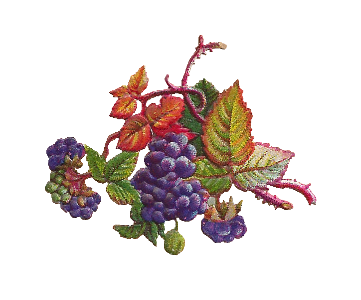 Grape clipart two Have of of Free and