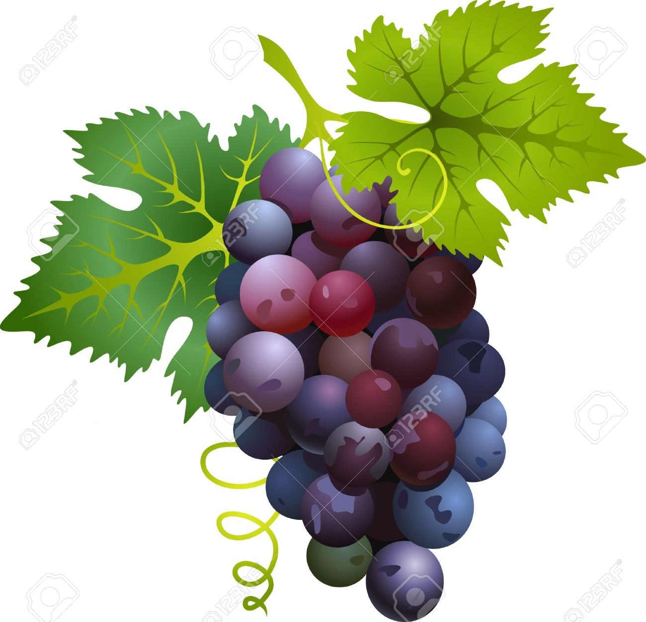 Grape clipart uva Grapes Art Clip art clip