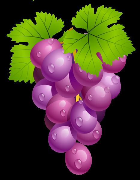 Grape clipart vector Food Explore more! Clip and