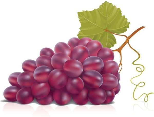 Grape clipart vector Grapes Cartoon ClipartMe Cartoon Clipart