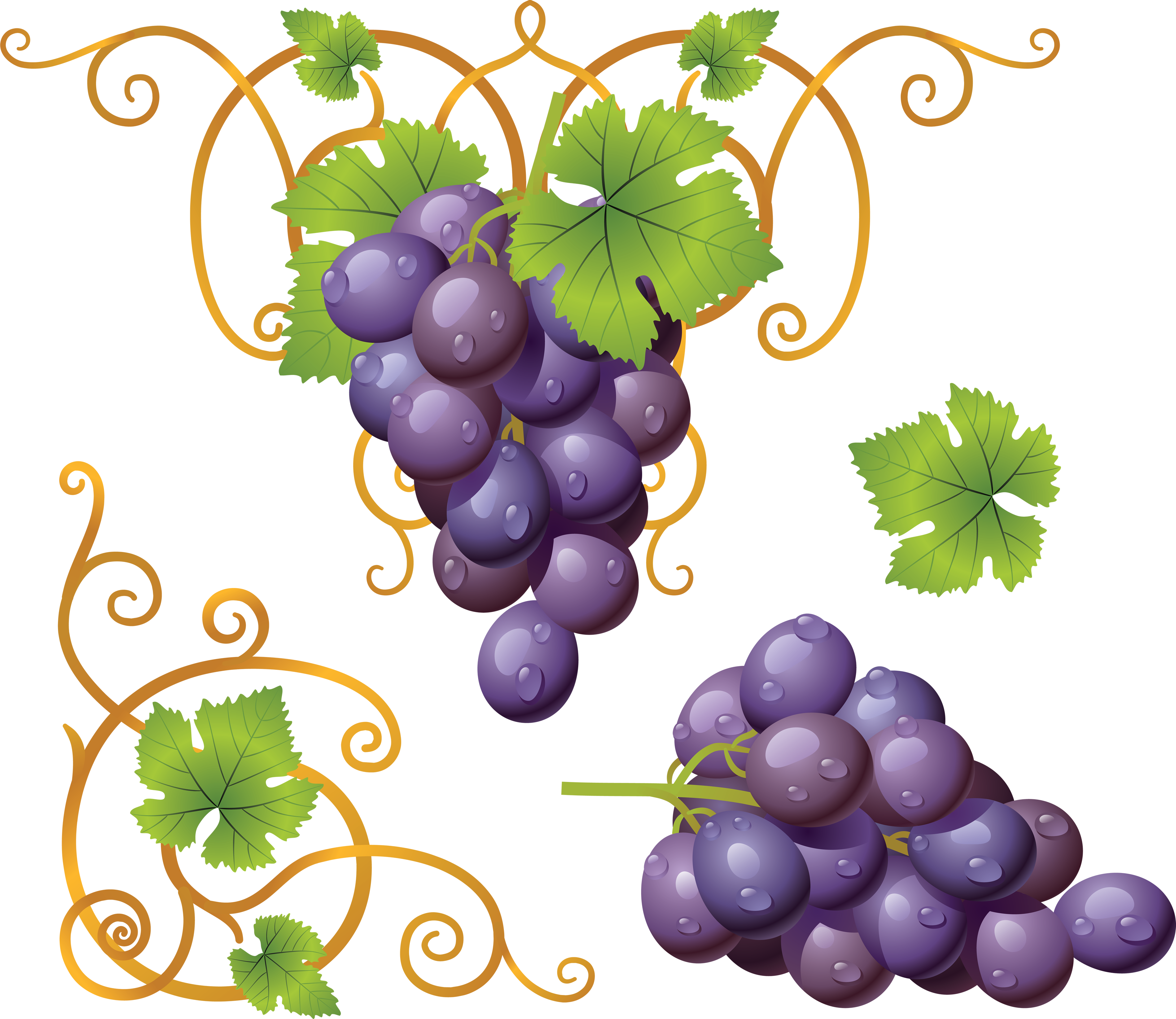 Grape clipart violet Image Grape download free picture