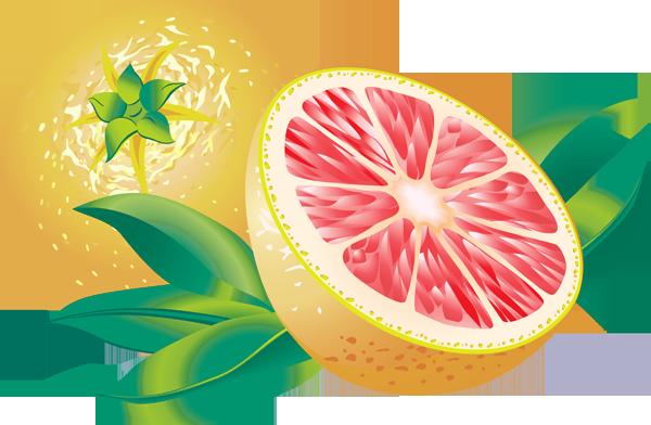 Grapefruit clipart Clip Grapefruit Grapefruit Grapefruit art