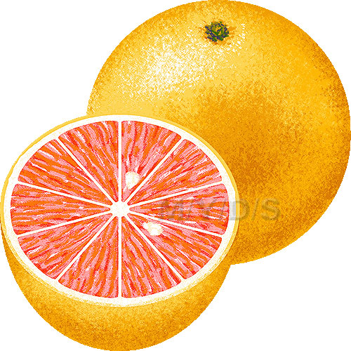 Grapefruit clipart Large clipart / Grapefruit Grapefruit