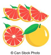 Grapefruit clipart And Illustrations Clipart grapefruit Stock