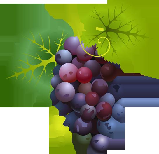 Grapes clipart Art 6 clip Grapes Grapes