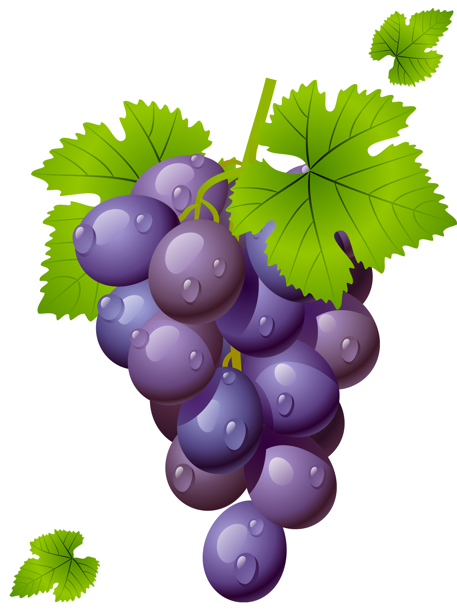 Grape clipart leafy vegetable Grape picture Grapes #28972 with