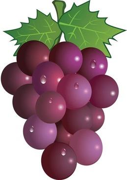 Grapes clipart Picture – print clipart com