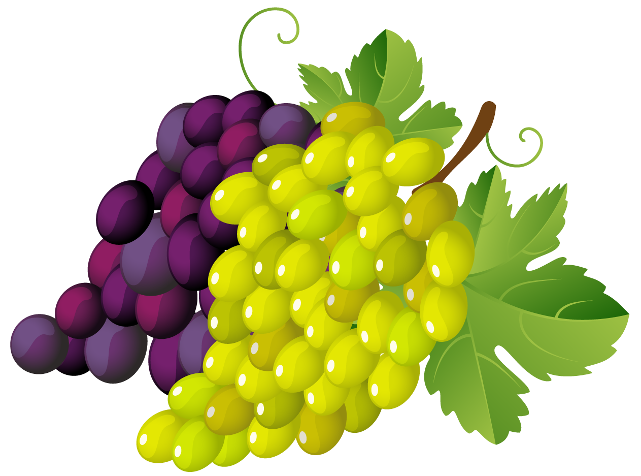 Grape clipart mango fruit Clipart 2 art Cliparting grapes