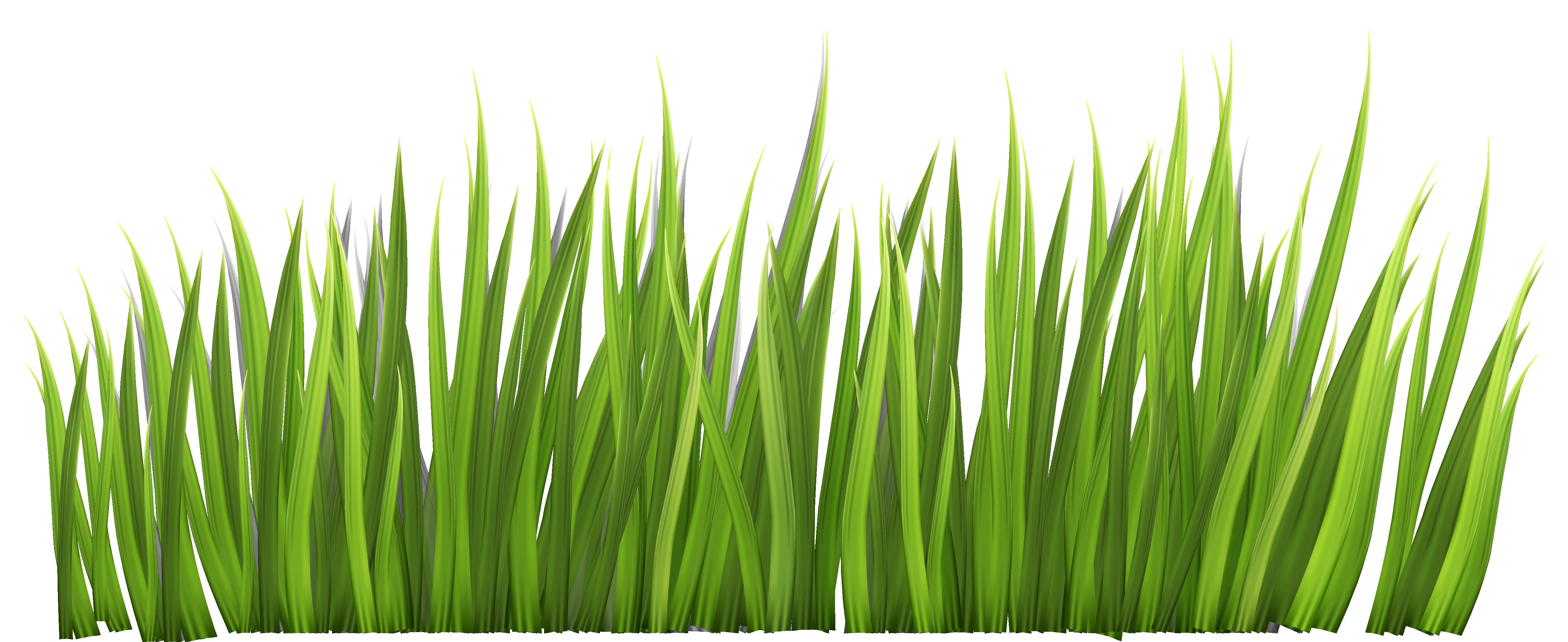 Blade clipart grass Art Free Grass Clipart Clipart