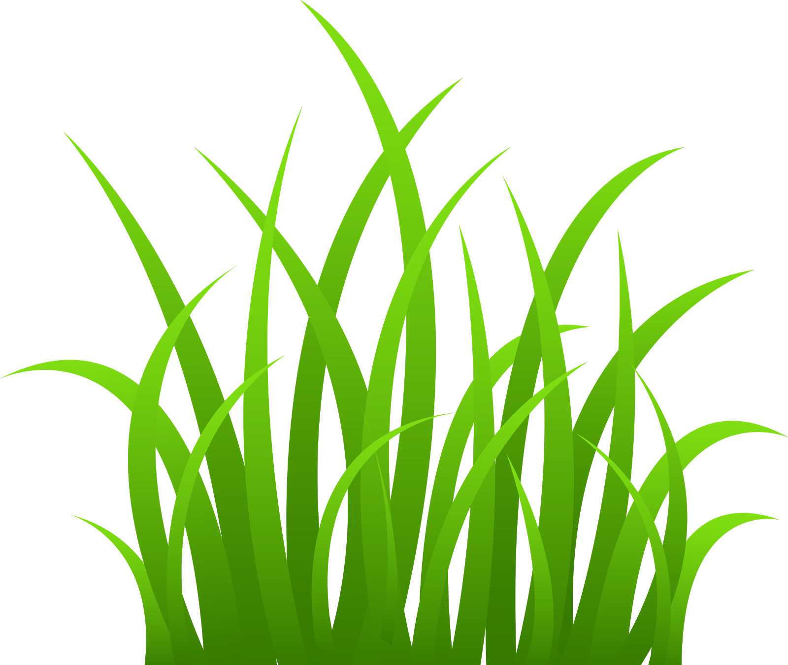 Reed clipart seagrass #6